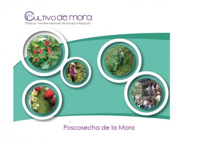 POSCOSECHA DE LA MORA