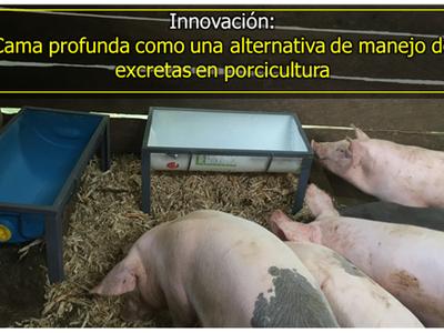 Cama profunda como una alternativa de manejo de excretas en porcicultura