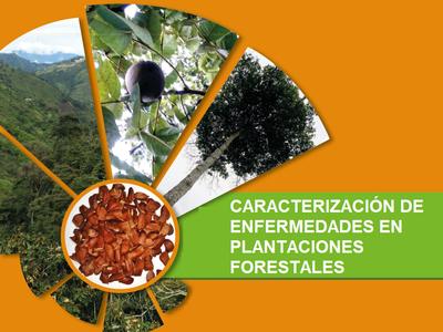 Caracterización de Enfermedades en Plantaciones Forestales - Introducción