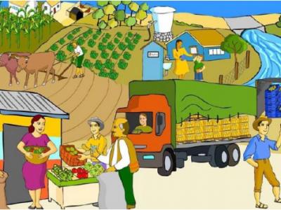 Implementación de las Buenas Prácticas Agrícolas (BPA)