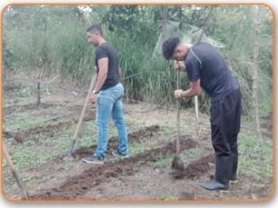 5. Preparación del Terreno