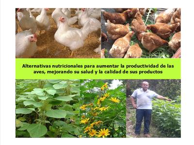 Alternativas nutricionales para aumentar la productividad avícola