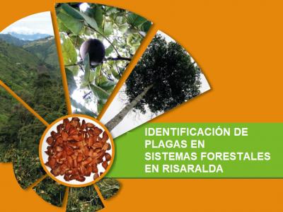 Identificación de Plagas en Sistemas Forestales en Risaralda