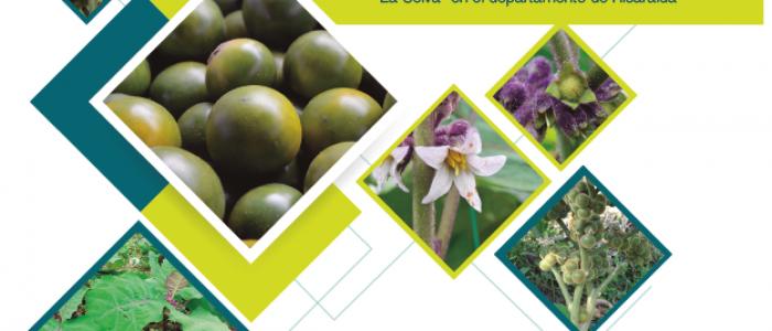PRINCIPALES INSECTOS ASOCIADOS A LULO cv LA SELVA (Solanum quitoense x Solanum hirtum) EN RISARALDA