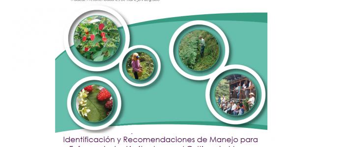 IDENTIFICACIÓN Y RECOMENDACIONES DE MANEJO PARA ENFERMEDADES LIMITANTES EN EL CULTIVO DE MORA